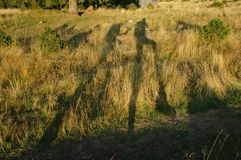 Hikers shadow on grass Stock Image