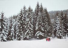 Hikers on snow slope in snow-covered forest at gray winter day Stock Image