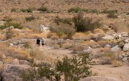 Hikers near Borrego Springs in California desert. Hikers on trail near Borrego Springs city in the Anza Borrego Desert State park in California Stock Image