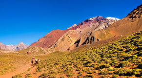 Hikers trekking in the Andes, Argentina, South America Royalty Free Stock Photo