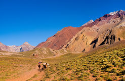 Hikers trekking in the Andes, Argentina, South America Stock Image
