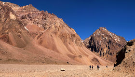 Hikers trekking in the Andes, South America. Hikers trekking in the Andes near Aconcagua, Mendoza, Argentina, South America royalty free stock photos