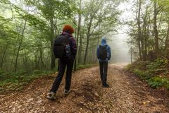 Hikers trekking into the forest Stock Image