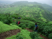 Hikers in tropical landscape. Hikers walking in mountainous green tropical landscape Royalty Free Stock Images