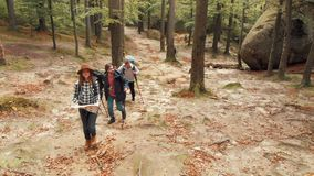 Hikers Use Map. Young caucasian hikers using map to get to the top of the hill, outdoor shot among green tall trees and huge stones on fall day stock video footage