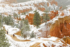 Hikers venture into snow covered Bryce National Park Royalty Free Stock Image