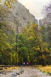 Hikers Walk into the Forrest. Two hikers walk into forrest at Bridalviel Fall at Yosemite National Park Royalty Free Stock Photos