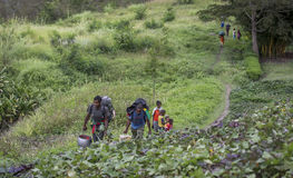 Hikers walking through Baliem Valley. Baliem Valley, West Papua, Indonesia, February 12th, 2016: hikers on the road stock photos