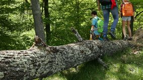 Hikers walking on fallen tree log in the forest stock footage