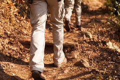 Hikers walking forest. Hikers walking in forest path stock photos