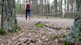 Hikers walking on hike path in forest outdoors. stock video footage