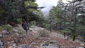 Hikers walking outdoors wearing hiker backpacks. Hikers walking through the blue pine forest towards the Tahtali mountain peak in Turkey, Antalya province stock video