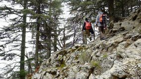 Hikers walking outdoors wearing hiker backpacks. Hikers walking through the blue pine forest towards the Tahtali mountain peak in Turkey, Antalya province stock footage