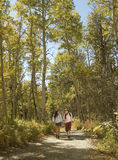 Hikers Walking On Path Through Woodland Stock Photography