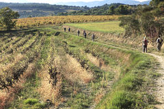 Hikers walking in wineyard Stock Photography