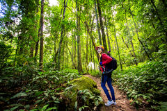 Hikers walking in the woods with a rich and mature trees, Trekke Royalty Free Stock Photo