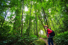 Hikers walking in the woods with a rich and mature trees, Trekke Royalty Free Stock Photography