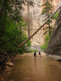 Hikers in Zion Royalty Free Stock Photos
