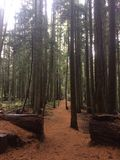 Hikes in the forest Royalty Free Stock Image