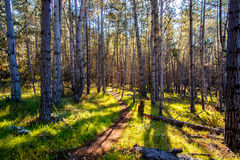 Hiking в древесинах Стоковые Фото