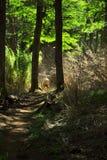 Hiking в древесинах Стоковая Фотография