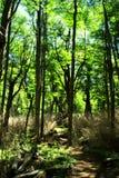Hiking в древесинах Стоковые Фотографии RF