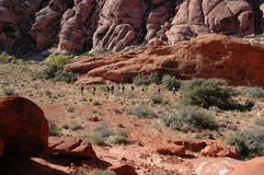 hiking группы Стоковые Изображения RF