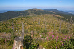 Hiking на arber Стоковое Изображение