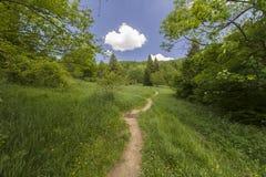 hiking путь Стоковое Фото
