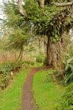 hiking путь стоковые изображения rf