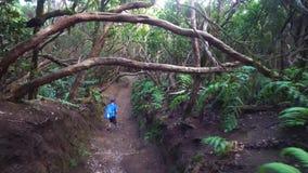 hiking пущи видеоматериал