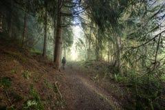 hiking пущи Стоковые Изображения RF
