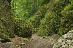 hiking тропка гор Путь среди утесов в лесе бука Стоковое Фото