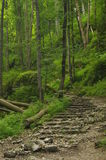 hiking тропка гор Путь среди утесов в лесе бука Стоковое Изображение RF