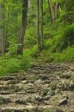hiking тропка гор Путь среди утесов в лесе бука Стоковые Изображения RF