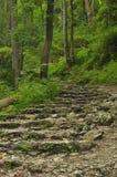 hiking тропка гор Путь среди утесов в туризме леса бука Стоковые Изображения