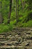 hiking тропка гор Путь среди утесов в туризме леса бука Стоковое Изображение RF