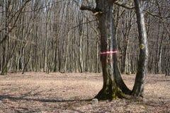 hiking тропка знака Стоковые Фото