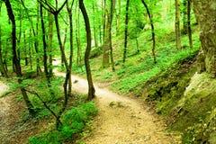 hiking тропка Стоковое Фото