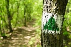 hiking тропка Стоковое фото RF