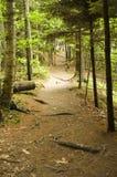hiking тропка Стоковое Изображение RF