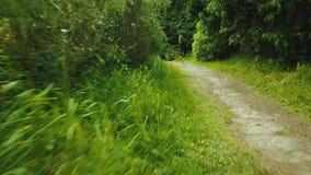 hiking тропки сток-видео