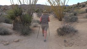 Active Woman With Trekking Sticks Hiking In The Mojave Desert Park Joshua Tree. Hiking active mature women with trekking poles, walking the footpath in the stock footage
