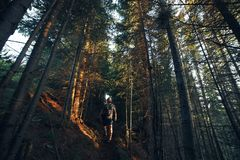 Hiking adventures of alone man photographer in evening forest.  Stock Image