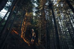 Hiking adventures of alone man photographer in evening forest.  Stock Photos