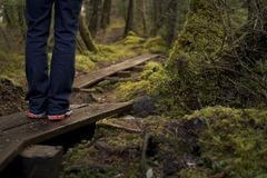 Hiking in a Alaskan rainforest. Hiking in cold wet environment taking a break standing on a boardwalk Stock Photos