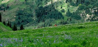 Hiking Allbion Basin stock photos