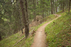 Hiking alone long a small mountain path inside the forest Stock Images