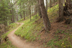Hiking alone long a small mountain path inside the forest Royalty Free Stock Image