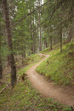 Hiking alone long a small mountain path inside the forest Stock Photos